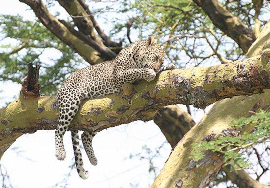 Restaurant Leopard Tarifs