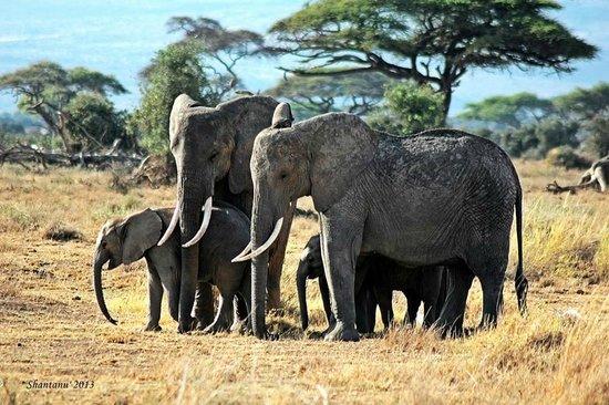 Amboseli National Park : Amboseli Elephants