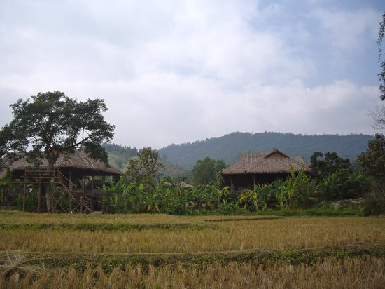 View of Lisu Lodge from their rice field
