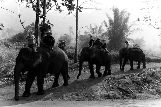 Ganesha Park : La compagnie s'amuse !
