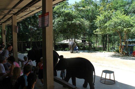 Hansar Samui Resort: elephant show
