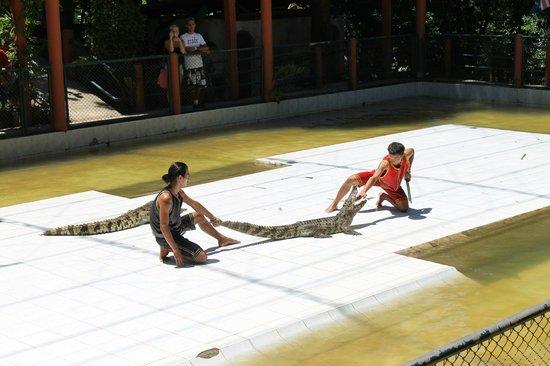 Hansar Samui Resort: crocodile show