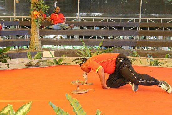 Hansar Samui Resort: snake show