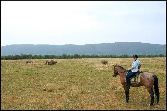 Horizon Horseback Adventures Lodge: Tommy and the rhino herd
