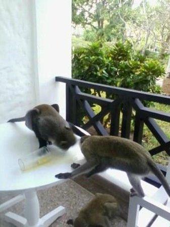 Diani Sea Resort: monkeys on balcony