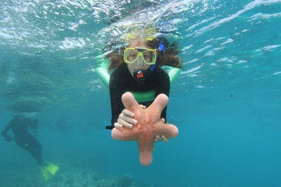 Poseidon Outer Reef Cruises : snorkeling at the GBR