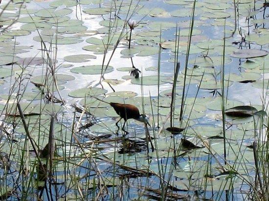 Lagoon Camp - Kwando Safaris: Au bord du fleuve près du restaurant