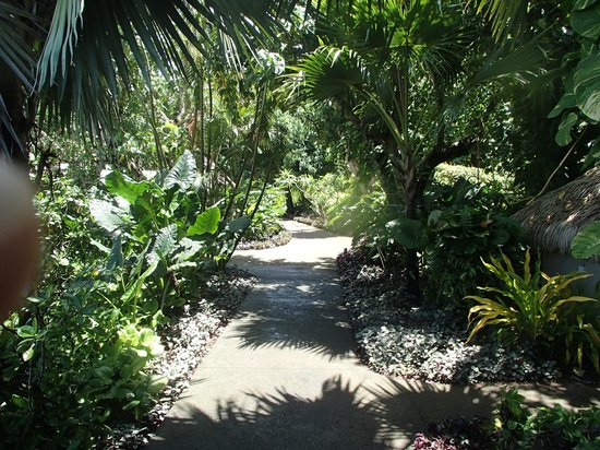Pacific Resort Aitutaki : Path to our room.