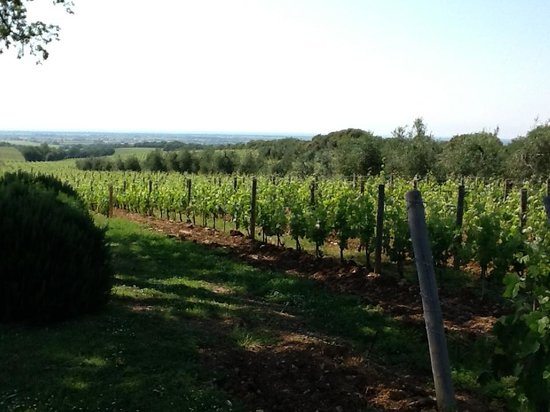 Tuscany Taste Tour : Winw Country