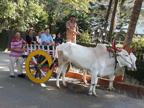 Prakruti Resort : Enjoying bullock-cart ride to beach
