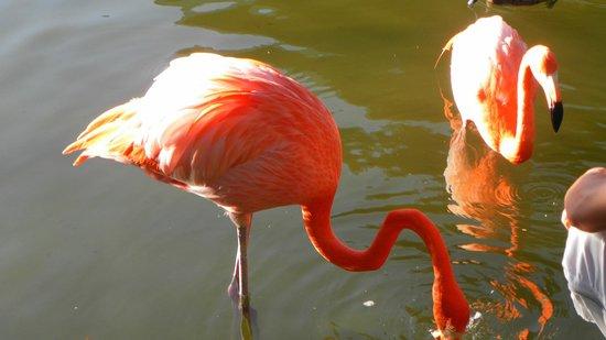 Bavaro Princess All Suites Resort, Spa & Casino: Dans une petite étang