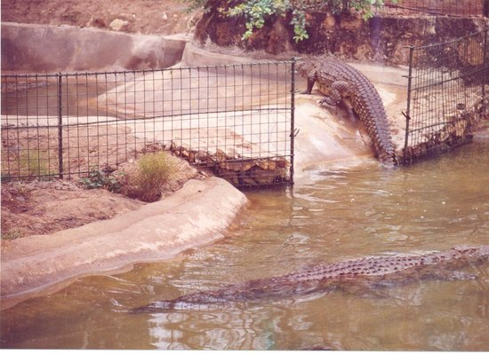 Blue Posts Hotel: tamed crocodiles, or are they?