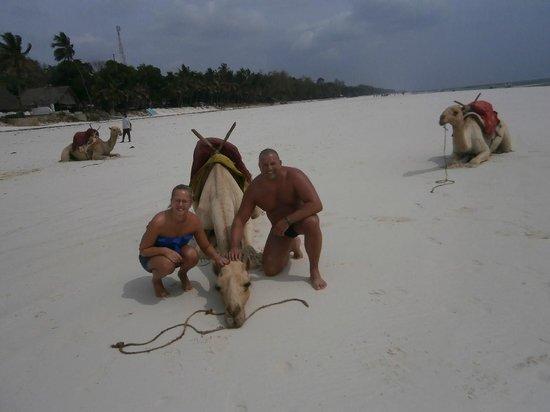 Diani Beach : Kamelreiten bei Ebbe