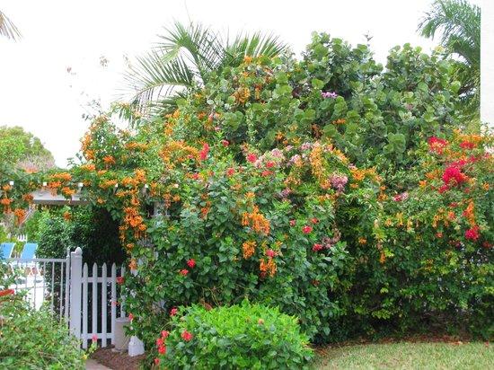 Sanibel Moorings Botanical Gardens : View near the pool