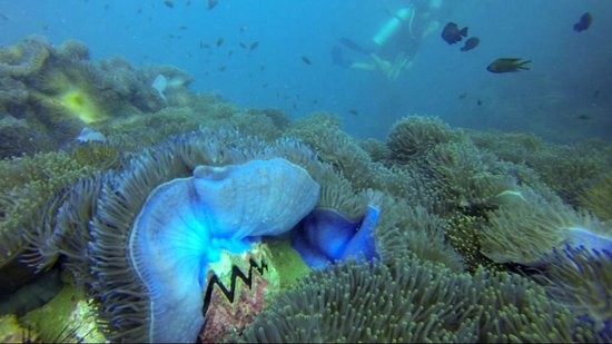 Charm Churee Divers: Chumphon