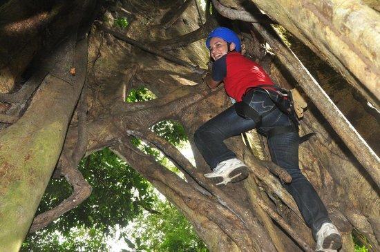 Serendipity Adventures Tree Climbing Day Trip