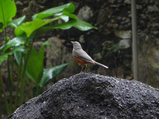 Botanical Garden (Jardim Botanico): Pássaros para fotografar