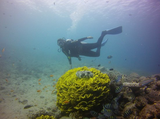 Easy Travel Egypt - Day Tours : Diving in Lighthouse, Dahab
