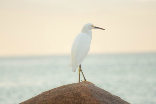 Crown Paradise Club Puerto Vallarta : A seagull takes a break beachside