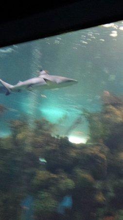 Malta National Aquarium: Its jaws great great cousin !!!