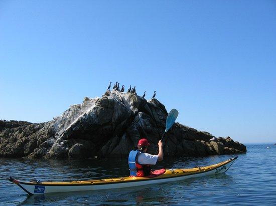 Kayak Sillages: kayak-sillages-quiberon-morbihan-bretagne-2