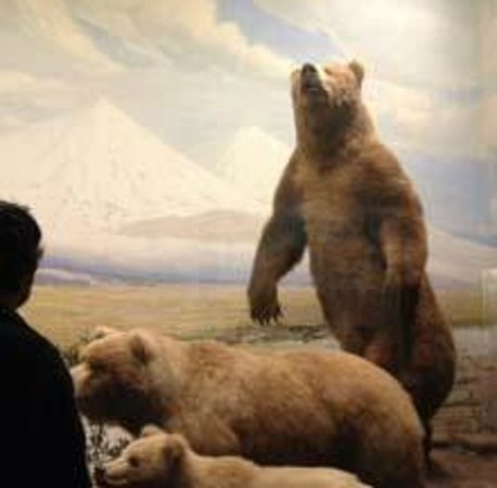 The Field Museum : Field Museum exhibit