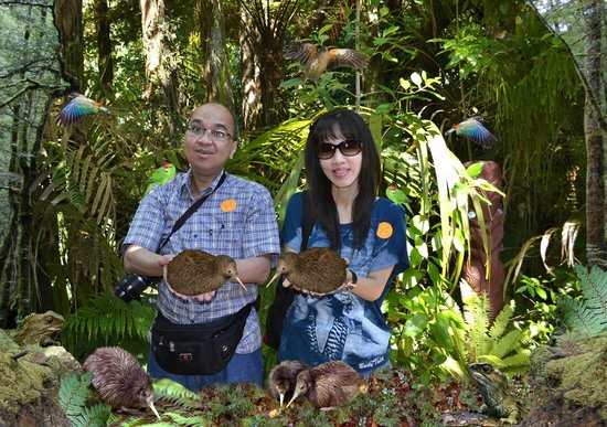 Rainbow Springs Nature Park: With the kiwi's