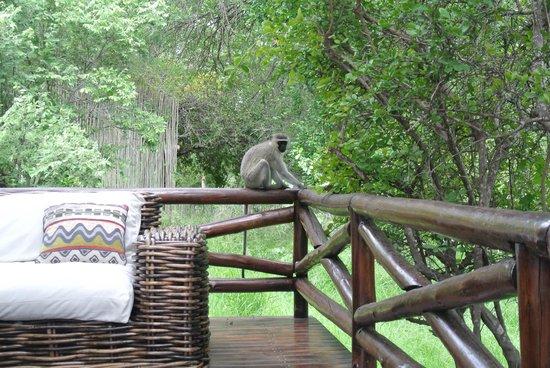 Naledi Game Lodges : Neighbor Visit