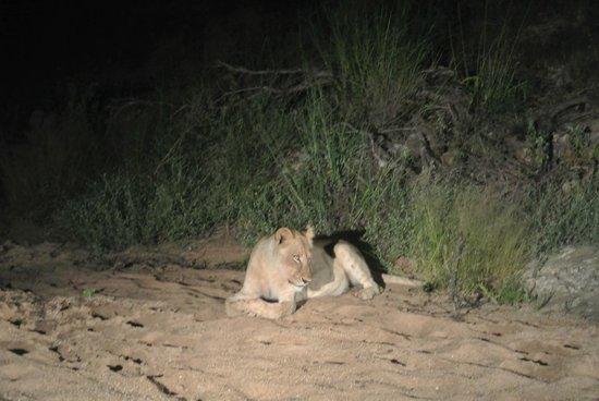 Naledi Game Lodges : Safari Drive