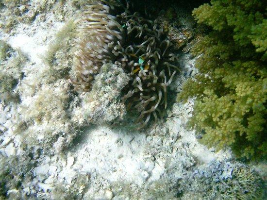 Blue Lagoon Marsa Alam : foto subacquee