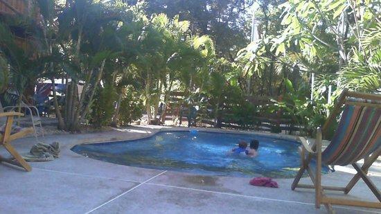 Sugar's Monkey : Playa Grande Pool area