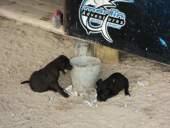 Playa El Tecolote (Tecolote Beach) : Puppies