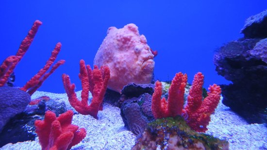 Maui Ocean Center: Don't know his name so I'll call him Mr. Pink Fish