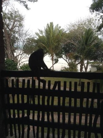 Baobab Beach Resort & Spa: Outside of our balcony our little friend