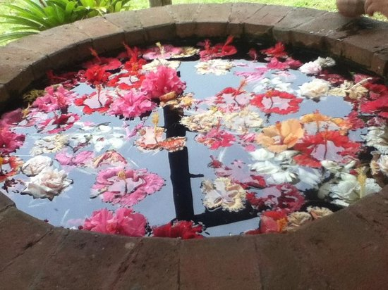 Eden Nature Park : make a wish in the well