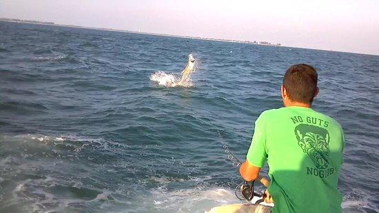 Steady Action Fishing Charters : Tarpon 1