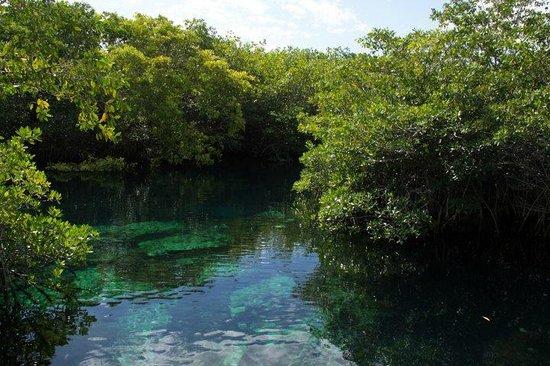 Bel Air Collection Resort & Spa Riviera Maya : kayak