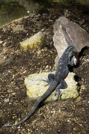 Bel Air Collection Resort & Spa Riviera Maya: animaux