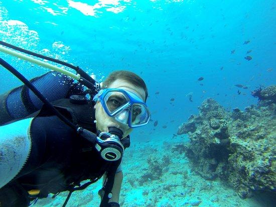 Royal Island Resort & Spa: Diving
