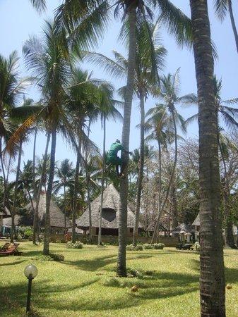 Neptune Village Beach Resort & Spa: Kokosnoten kappen