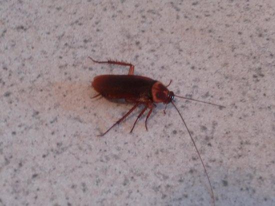 Kingsail Resort Motel: Gros insecte trouvé dans le tiroir de la cuisine