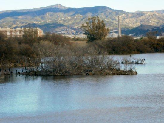 Tryp Malaga Guadalmar Hotel : Nature Reserve