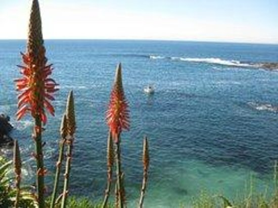 Montage Laguna Beach: View of the Ocean from the paths along the hotel grounds