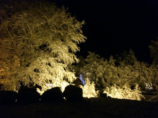 Suidhe lodge and suie bar: The trees in the garden covered in snow