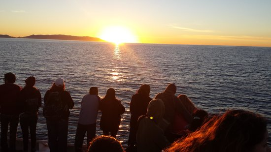 2SeeWhales Harbor Breeze Cruises : Waiting for the whale while the sun sets. ...