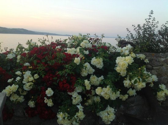 Cary Arms & Spa : Beautiful flowers at sunset as seen from Cary Arms patio