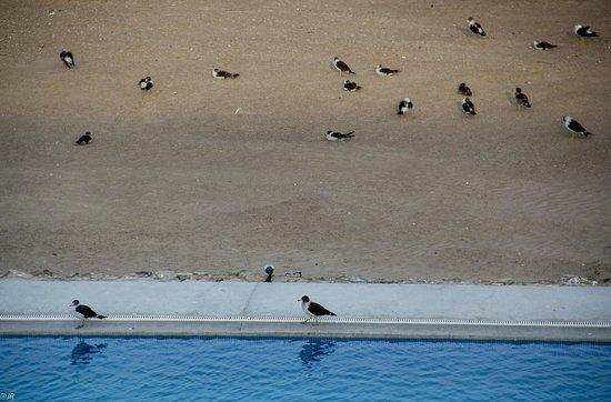 San Agustin Paracas: Birds by the pool