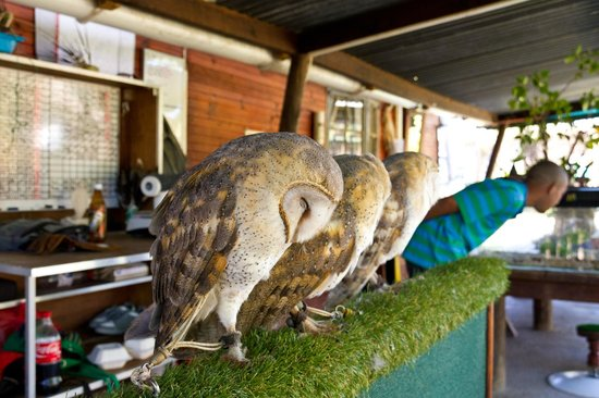 Eagle Encounters South Africa: Owls at Eagle Encounters.