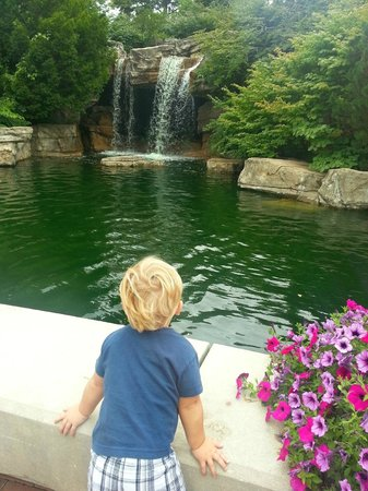 St. Louis Zoo: I loved this waterfall.