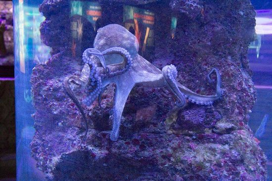 Xcaret Eco Theme Park : aquarium